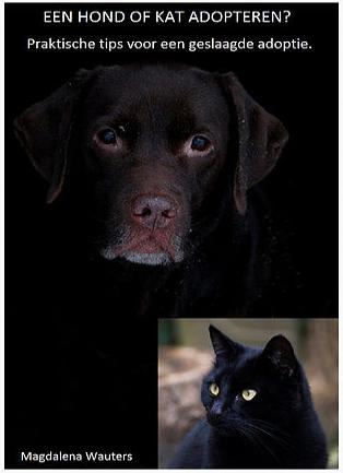 een hond of kat adopteren foto